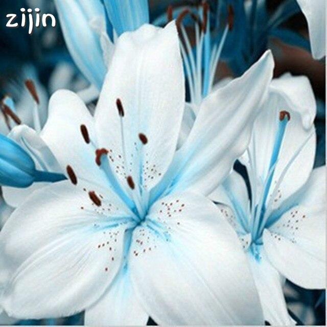 100 piezas especial Corazón Azul planta de lirio en maceta plantas de bonsái Flor de lirio para el jardín del hogar purifica el Color de mezcla de aire interior
