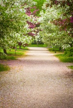 Laeacco Flowers Road Trees Pathway Rural Scenic Photography Backgrounds Customized Vinyl Photographic Backdrops For Photo Studio