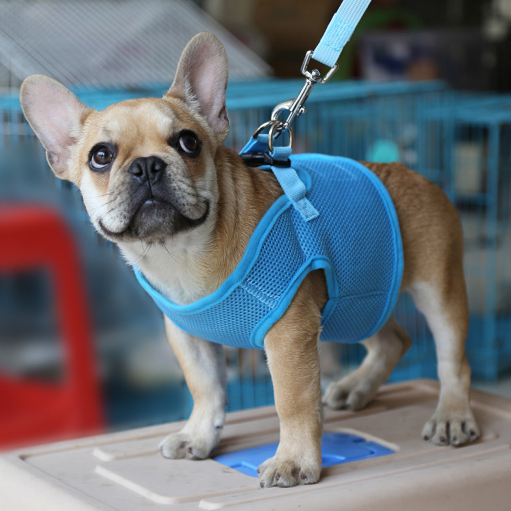New Hot Sale Breathable Mesh Pet Puppy Dog Walking Collar Chest Strap Harness Blue Dog Clothes