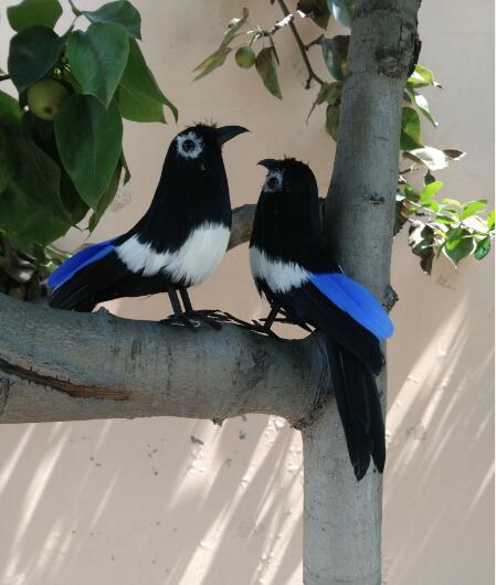 Plumas Negras Parejas Aves Urraca Un Lote2 Unids Sobre 16 Cm