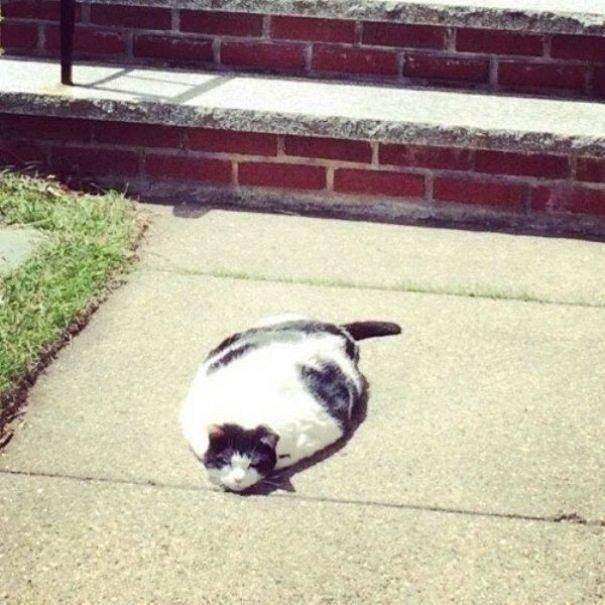 迷路猫的猫和SP的热熔胶一起融化了