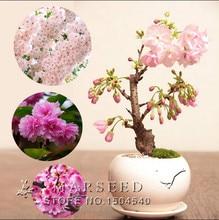 Free Shipping 5 Pink Cherry Tree Seeds,DIY Home Garden Mini Bonsai,easy growing