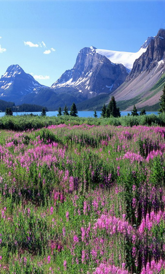 Nature scenic vinyl cloth purple flower field mountain photography backdrops for wedding kids