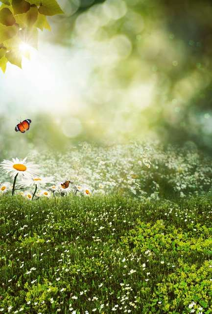5x7ft sunlight green bokeh white flowers grass field butterfly 5x7ft sunlight green bokeh white flowers grass field butterfly custom photo studio backdrop background vinyl 220cm mightylinksfo