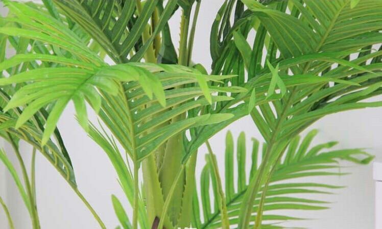 Resultado de imagem para ramos de palmeiras