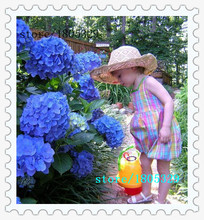 100 Blue Hydrangea Flower Seeds Bonsai Tree Need Almost No Care