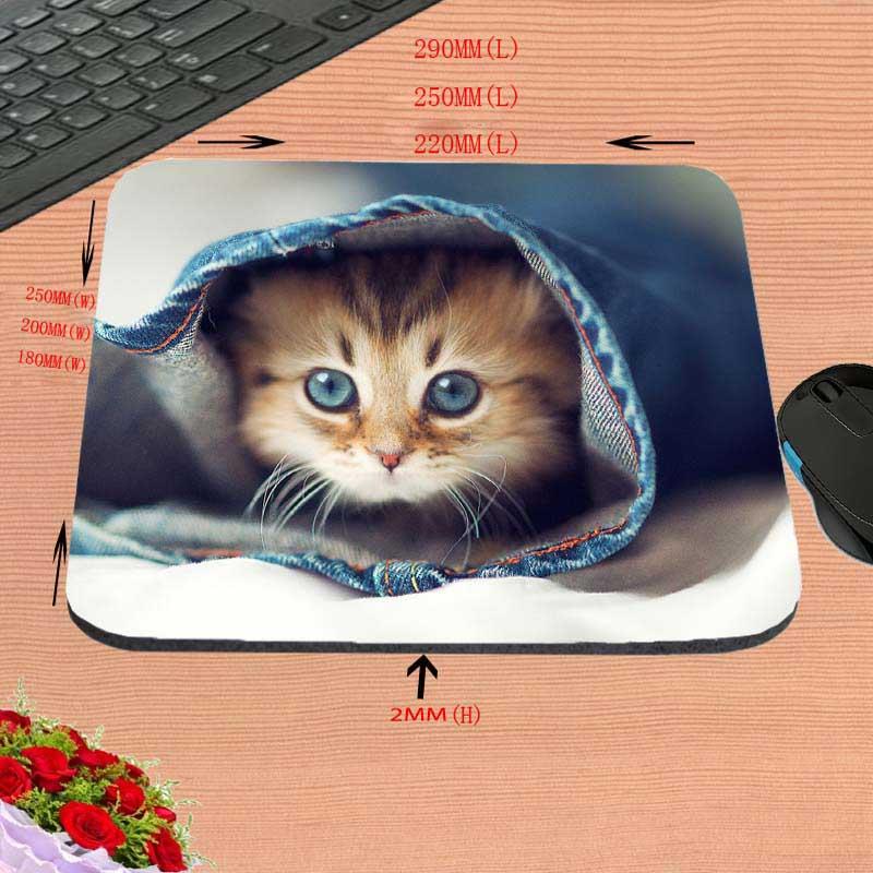 Gatos lindos Backgroun blanco de la nueva llegada de la alta calidad - Periféricos de la computadora - foto 5