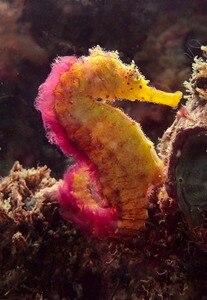 Image 4 - Weefine WFL05S + 13กันน้ำMacroเลนส์เปียกClose Upเลนส์M67สำหรับSony RX 100กล้องถ่ายภาพใต้น้ำ