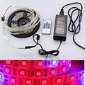 5050 grow led strip cinta 5:1 5 rojo 1 azul acuario de efecto invernadero Planta hidropónica Crece la Lámpara 60led/m + RF remoto + DC 12 V Potencia