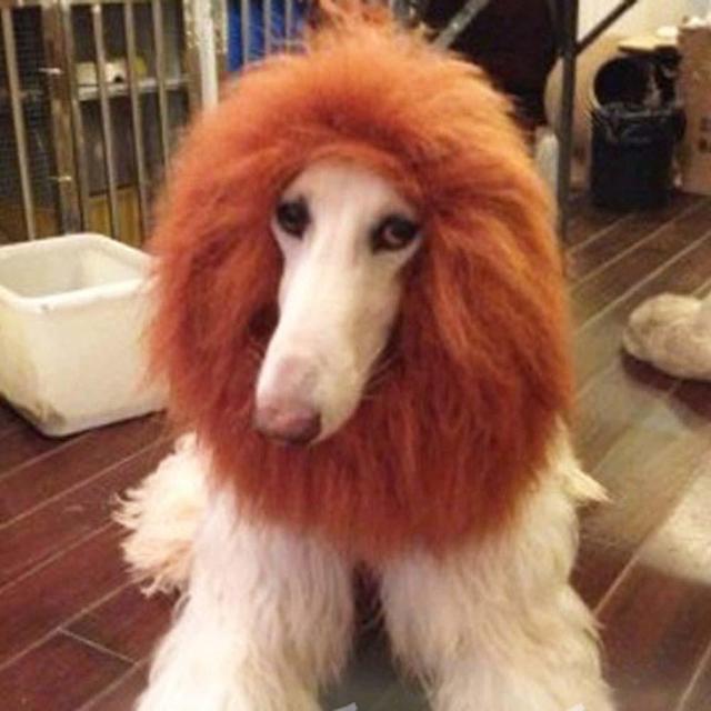 pet costume dog lion wigs mane hair festival party fancy dress up halloween costume pet lion