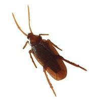 10pcs Fake Roaches Prank Novelty Cockroach April fool s day props Gag Joke Toys