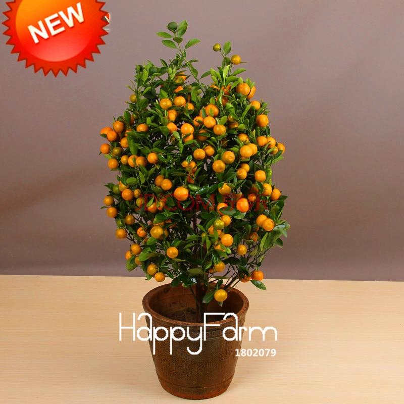 Best-Selling!100pcs/bag Balcony Patio Potted Fruit Trees Planted Seeds Kumquat Seeds Orange Seeds Tangerine Citrus,#8B9JQ4