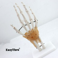 лучшая цена Human Hand Joint Anatomical Skeleton Model Medical Science Health Anatomy 1:1 Life Size Human Hand Joint Model anatomy medical