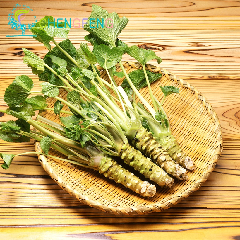 50 шт./лот васаби семена, японский хрен семена овощей бонсай завод DIY домашний сад бесплатная доставка