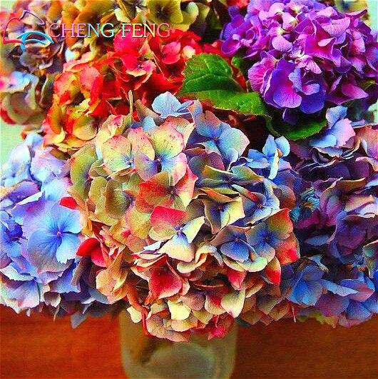 Hortensias de color compra lotes baratos de hortensias - Semillas de hortensias ...