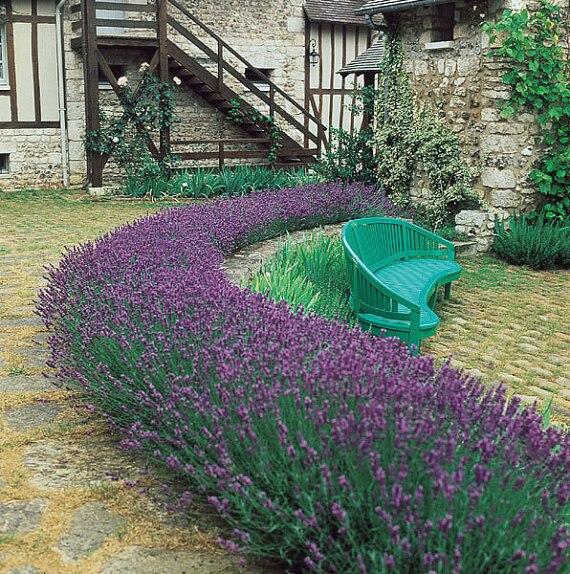 Bulk Garden Seed Promotion Shop for Promotional Bulk Garden Seed
