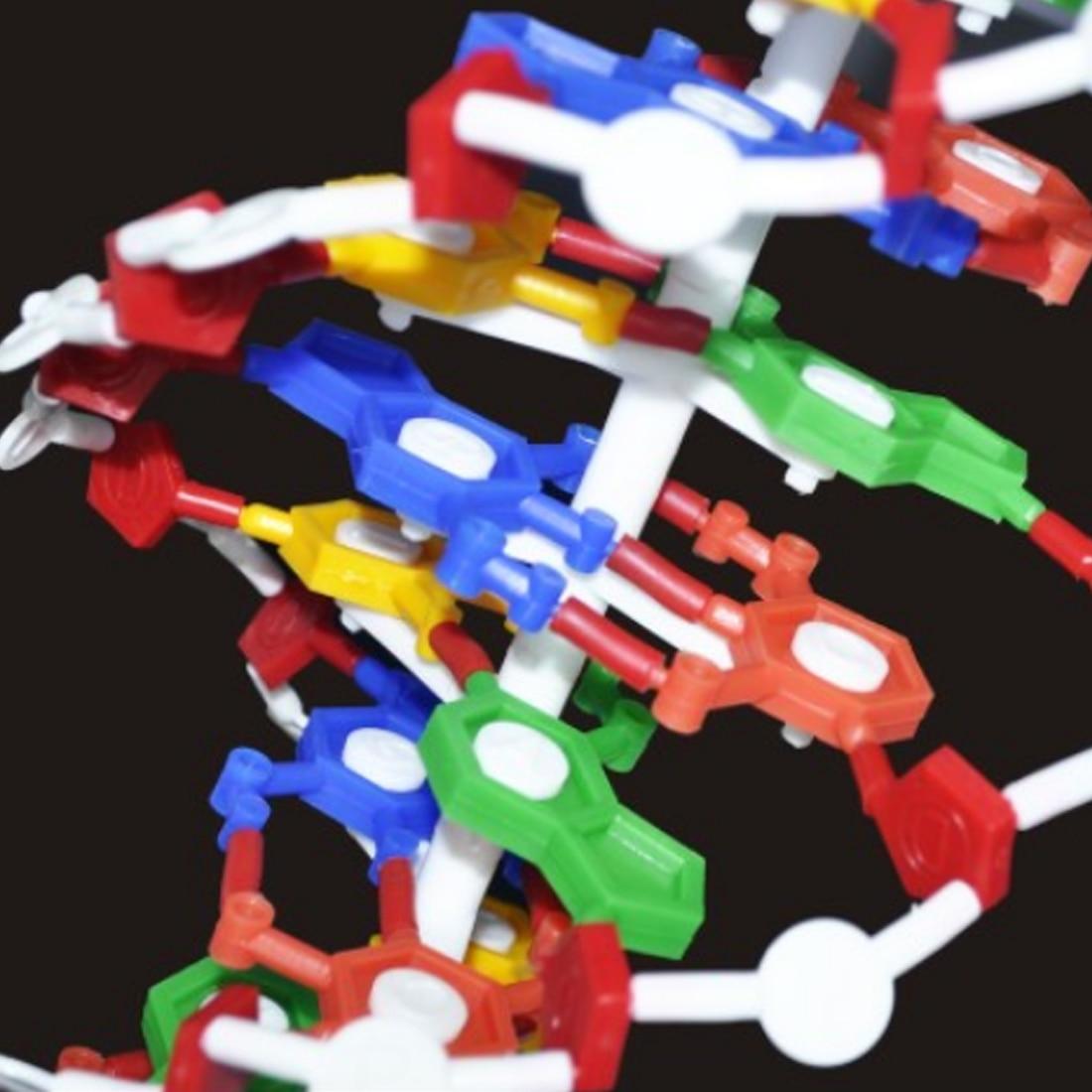 NFSTRIKE biologie aides pédagogiques modèle de Structure d'adn accessoires éducatifs étude adn Science équipement jouets pour enfants 2018 nouveauté - 5