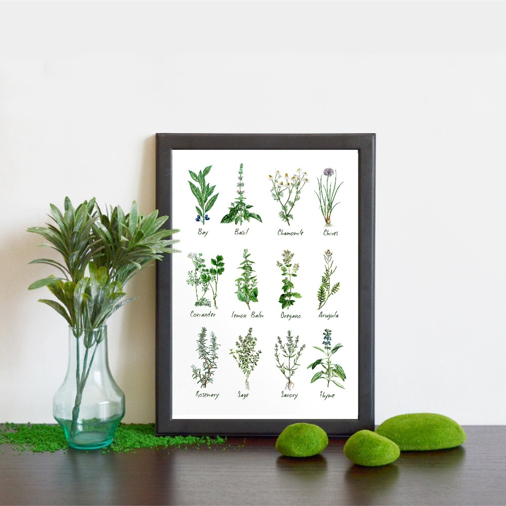 Kitchen Art Decoration Botanical Chart Wall Art Canvas Poster Prints Herbs And Spices Painting Picture Herbarium Home Wall Decor