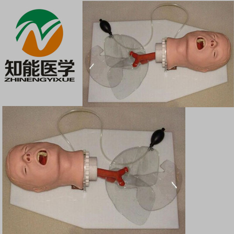 Hot Sell Direct Selling BIX-J50 Airway Training Model,Trachea Intubation Training Model W005 iso economic newborn baby intubation training model intubation trainer