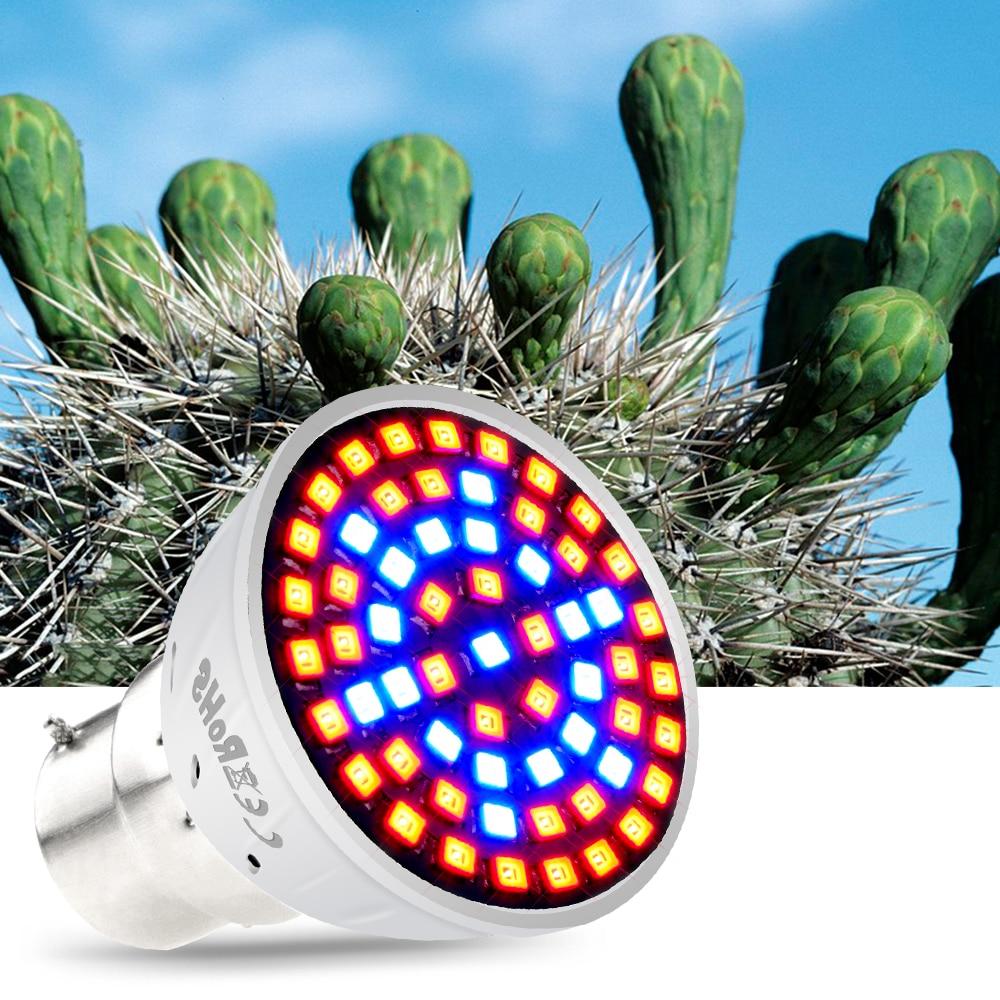 B22 Flower Seedling Bulb AC 220V E27 LED Grow Lamp GU10 Growing Light For Plants Indoor E14 Led Full Spectrum 48 60 80leds MR16 in Growing Lamps from Lights Lighting
