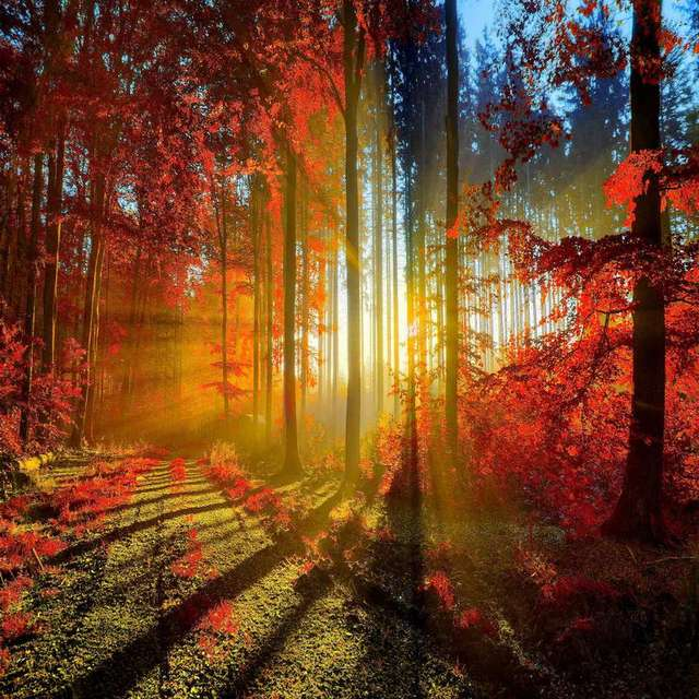Sunset Autumn Cute Fall Trees backdrops Vinyl cloth High quality Computer print wall Backgrounds ...