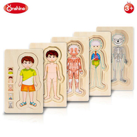 Onshine Wooden Multi layer Puzzle Toys Boys Girls Body Structure Children Kids Learning Cognition Toys Educational For Children