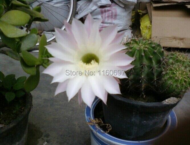 Compra mini jardín de cactus online al por mayor de China ...