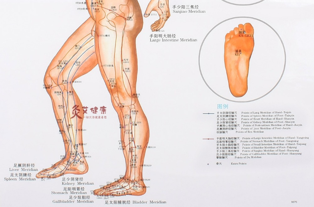 acupuncture meridian charts: Clear side wall map the human body chart meridian points meridian