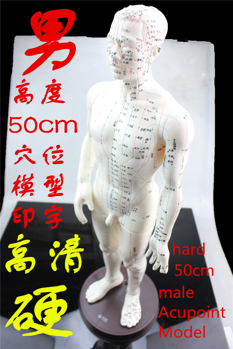 HD clear hard human Acupuncture Model 50cm male with Base Human acupuncture meridians model Acupoint Model Acupuncture massage