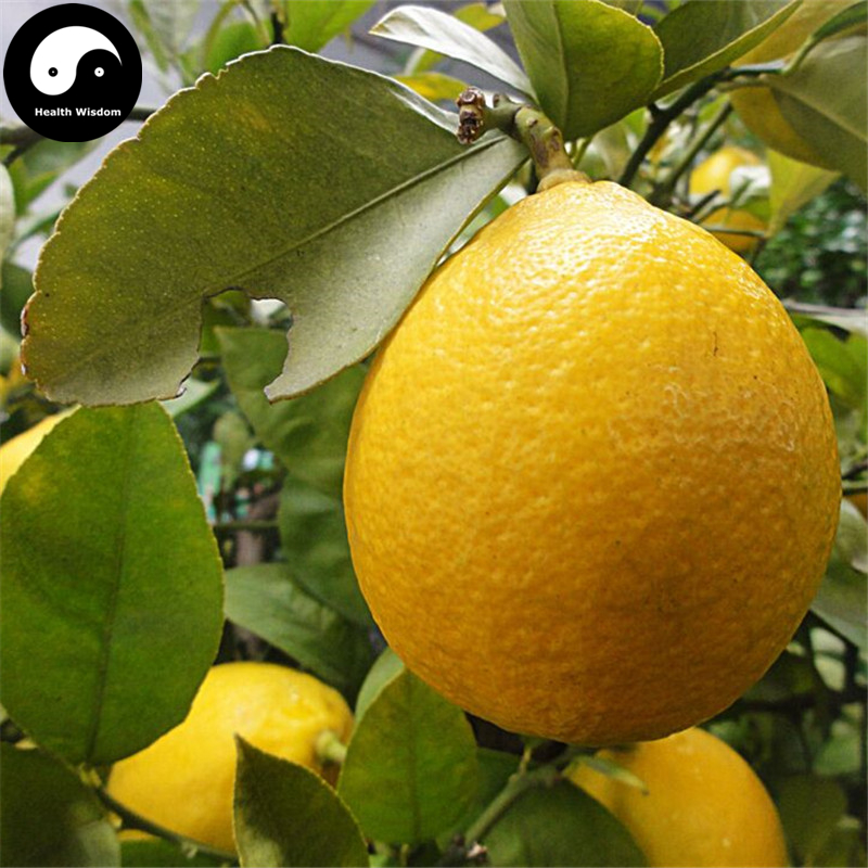Buy Citrus Limon Fruit Semente 40pcs Plant Lemon Orange Tree For Fruit Ning Meng