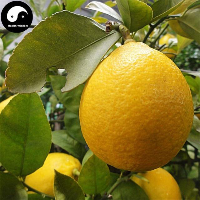 Gemeinsame Kaufen Citrus Limon Obst Semente 40 stücke Anlage Zitrone Orange @GI_16