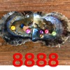 Free Shipping 7 PCS Colored Pearls In 1 Oyster 7 Pcs 6 5 7mm ROUND Pearl