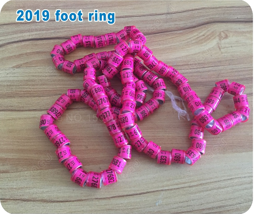 US $10 19 30% OFF|2019 pigeon leg rings identify dove bands 8mm plastic  with Al GB rings pigeon training supplies aluminium rings for pigeons-in  IC/ID