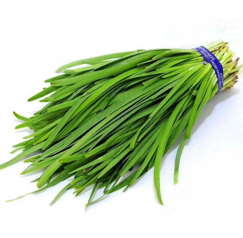 100 قطعة/الحقيبة الثوم الصيني كل شيء أخضر غير المعدلة وراثيا لذيذ العصير الكراث حديقة الخضروات النبات لزرع وعاء الزهور سهلة النمو
