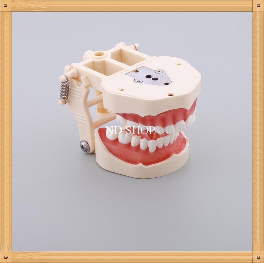 Spring adjustable  Teaching Teeth Model Soft Gum M8014/Dental Study Teeth Model with32 screw in teeth/Teeth MODEL With bracket 1 pcs dental standard teeth model teach study