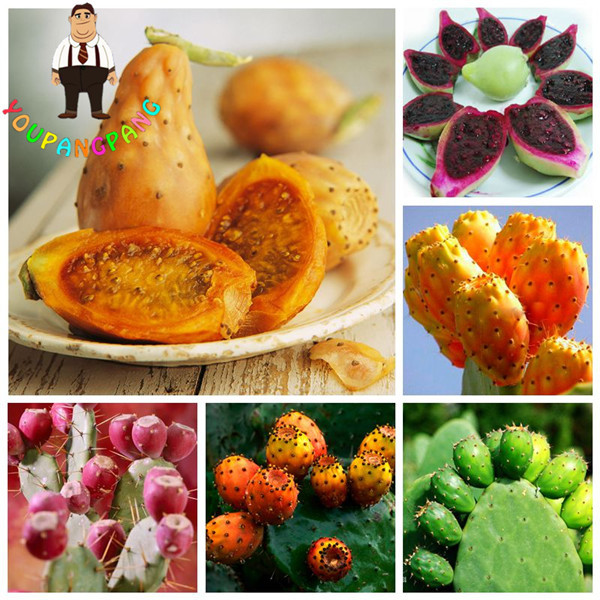 100 Pcs Prickly Pear Cactus Rare Sweet Nutritious Edible Fruits plants Flower Garden Bonsai Opuntia Leptocarpa