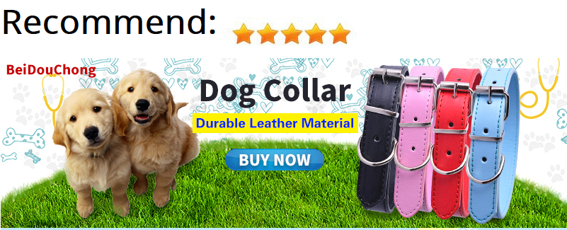 Vinyle Autocollants chien//COEURS//AMOUR//Pets//verres//lanternes.