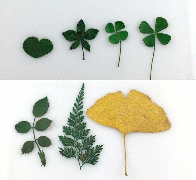 100pcs dried lucky leaf leaves fern leaf ginkgo leaf for wedding