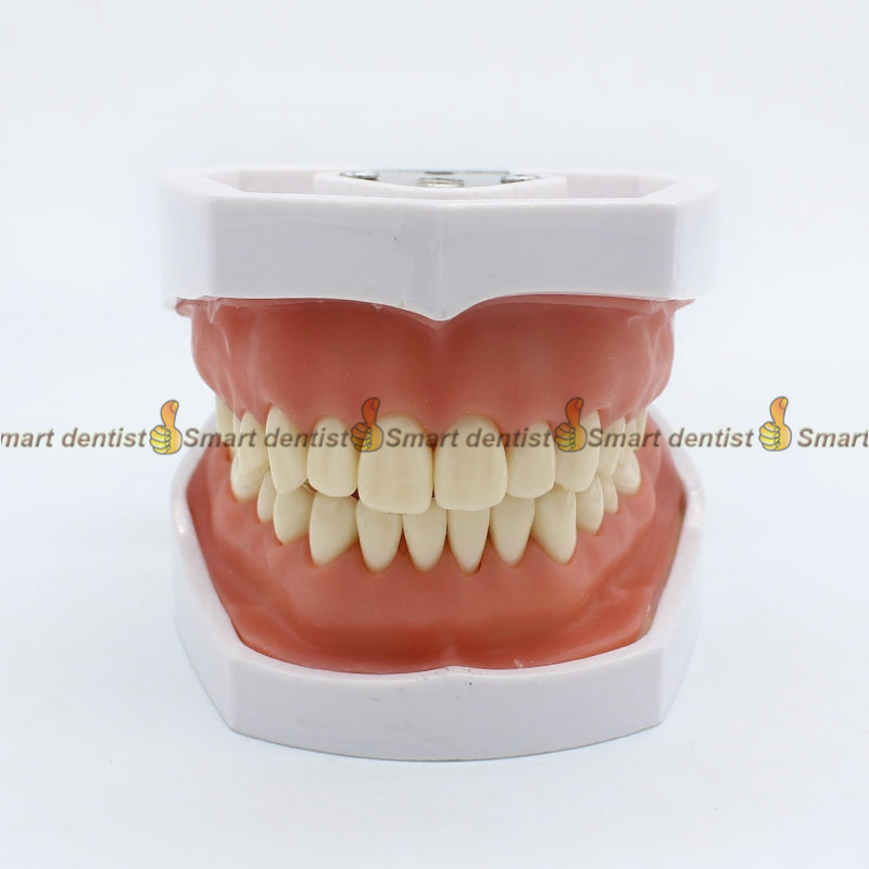 2018 high quality dental teeth model Removable tooth model Excretion exercise model Preparation teeth training dental model teeth model blue dental orthodontics communication model with 4 types of brackets