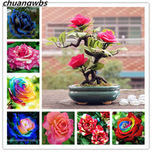 100 pcs Rare Holland Rainbow Rose Flower bonsai Home Garden plant rainbow flores,rose flower seedlings