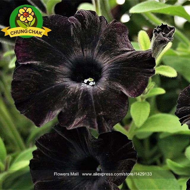 Flores raras online gratis cinematri for Plantas exoticas online