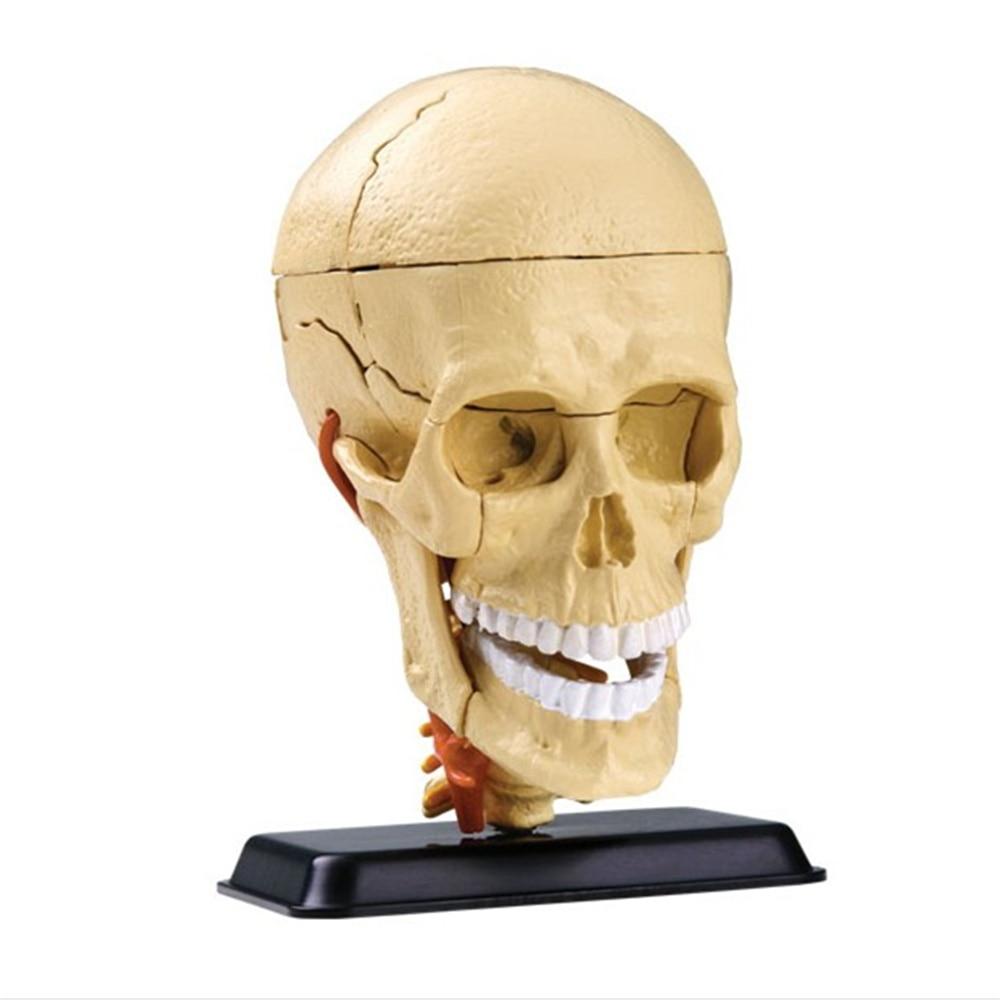 3D Mini Human skull assembly model 31 pcs Assembled Human Anatomy Model Gift for Children mini human hand assembly model assembled human anatomy model gift for children