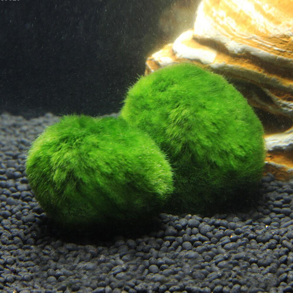 Living aquarium fish tank - 3 4cm Cladophora Live Aquarium Plant Fish Tank Shrimp Nano For Marimo Moss Balls Fish