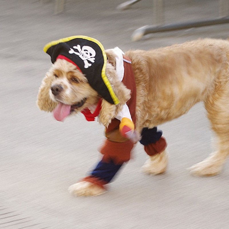 Pet Cat Funny Halloween dog Pirate costume clothes with a Skull hat for dog and cat Pet clothes coat Corsair palm S XL-in Dog Coats u0026 Jackets from Home ... & Pet Cat Funny Halloween dog Pirate costume clothes with a Skull hat ...