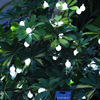 Led Solar Lamps Ball Waterproof Colorful Fairy Outdoor Solar Light Garden Christmas Party Decoration Solar String Lights promo