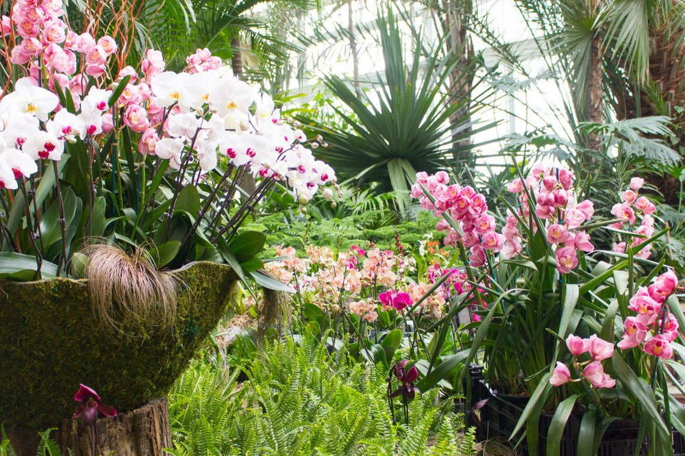 Phalaenopsis Orchids Variety And Mix Of Types Colors Sizes From Small To Large