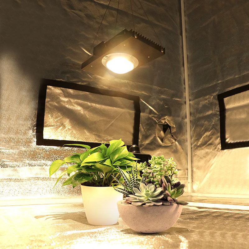 Cree cxb3590 100 w 200 cob led crescer espectro completo de luz substituir hps 200 400 lâmpada para hidroponia indoor estufa tenda planta