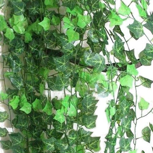 vine plants. vine. diy home plans database, Beautiful flower