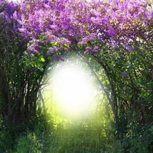 Laeacco Magic Spring Forest Flowers Branch Grassland Photography Backgrounds For Photo Studio Vinyl Custom Backdrops Props