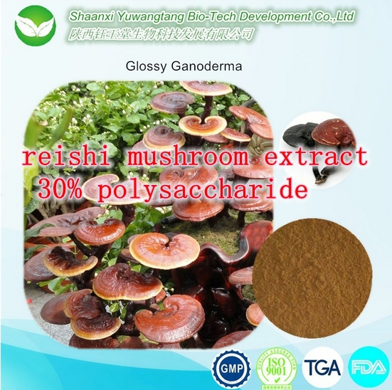 High quality reishi mushroom extract 30% polysaccharide 500g manufacturers to supply high quality 100g wild chrysanthemum extract 30 1